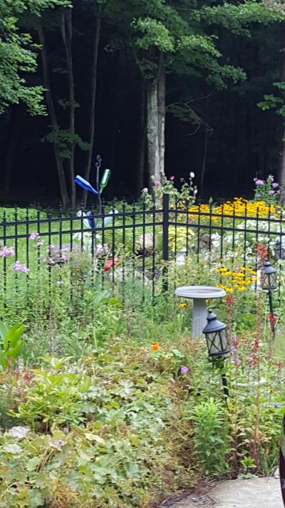 #garden #lindabauwin
