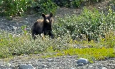 #suincentivetrip #grizzlybear #lindabauwin